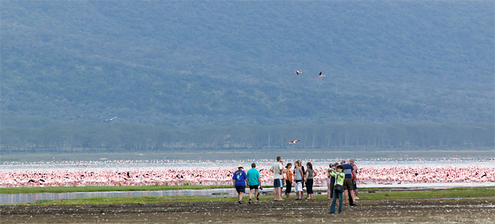 Tourists watching flamingos lake nakuru