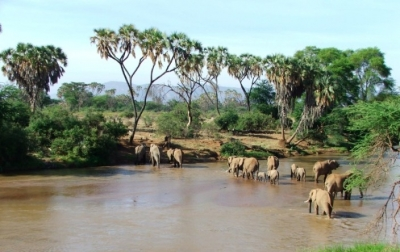 Samburu-Safaris