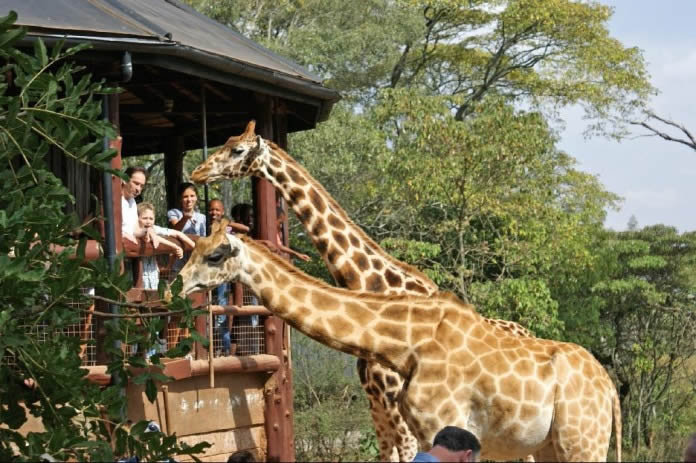 Giraffe_Center